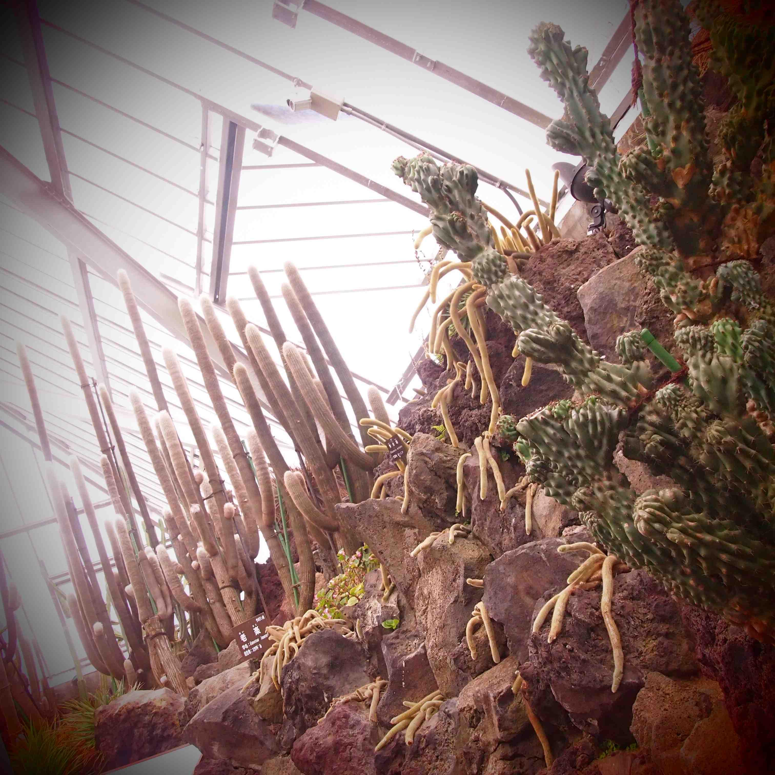 サボテン温室1