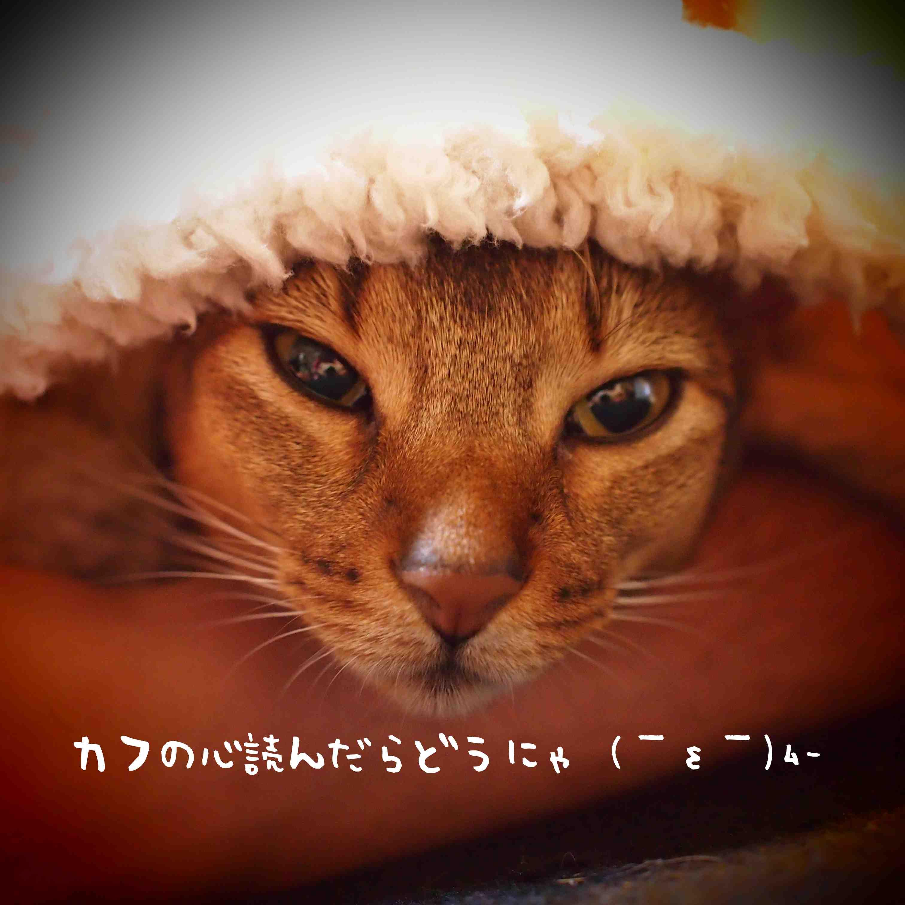 PA031380_2.jpg