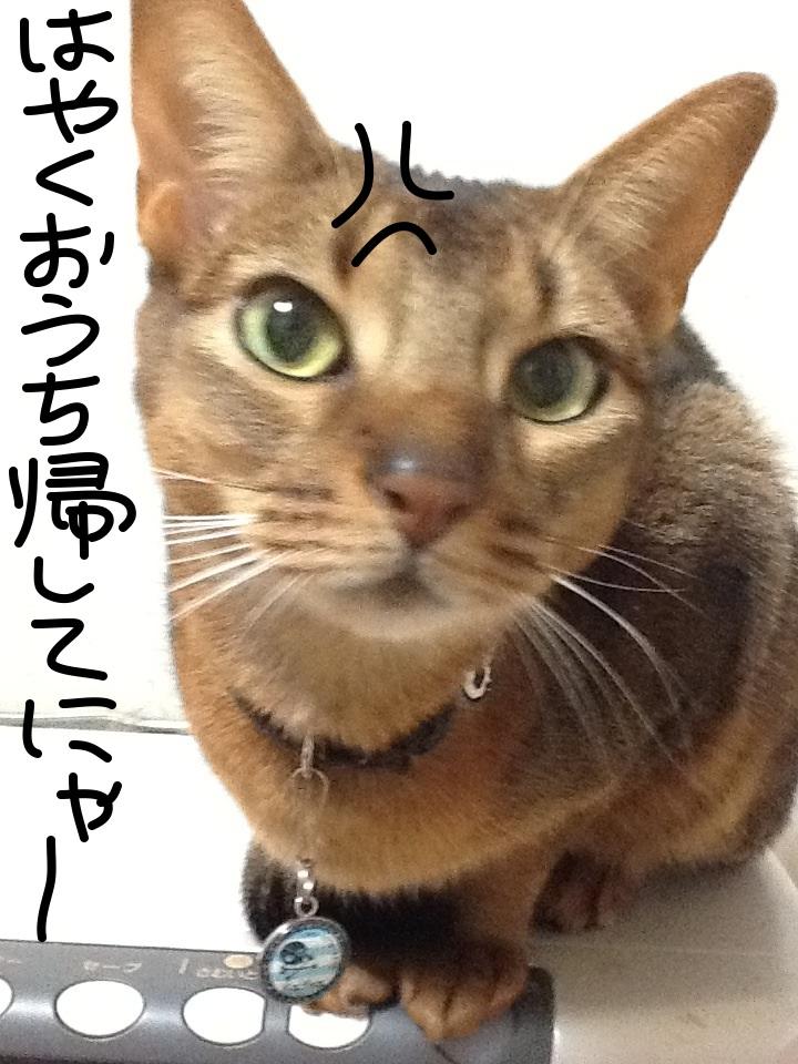 image_20121229153934.jpg