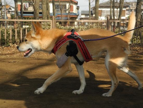 20140203 Sym シムを千葉に迎えに行く (35)