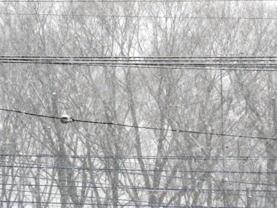 20140204 Sym シムを荼毘に付した (4)
