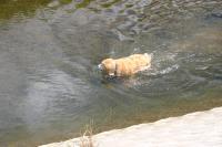 川へ画05