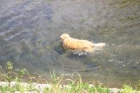 川へ画06