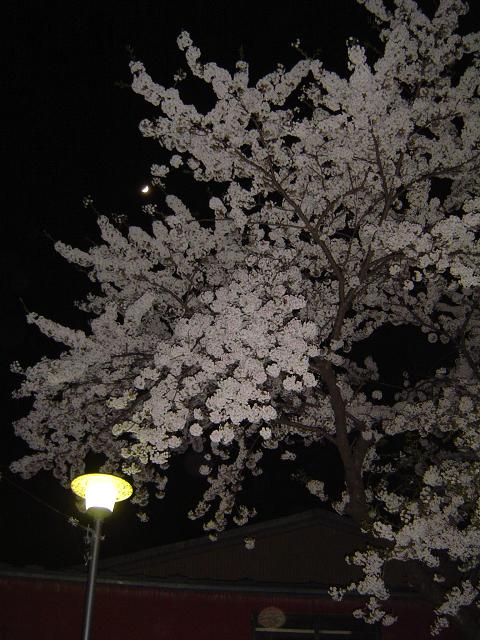 2006年の夜桜