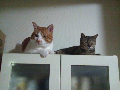 戸棚の上でくつろぐ