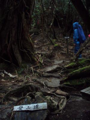 201204屋久島20