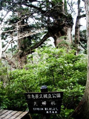 201204屋久島23