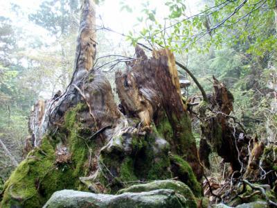 201204屋久島27