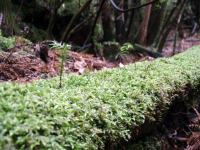 201204屋久島31