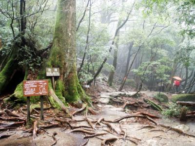 201204屋久島36