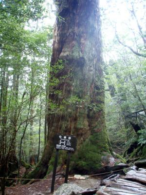 201204屋久島37