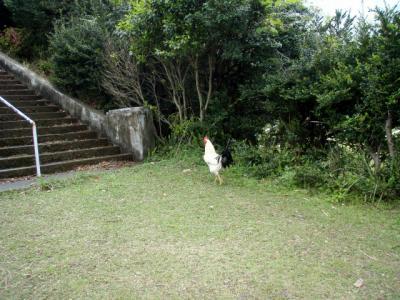 201204屋久島40
