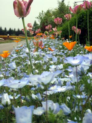 20120508備北丘陵公園11