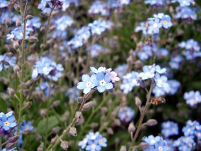 20120508備北丘陵公園12