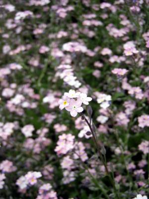 20120508備北丘陵公園15