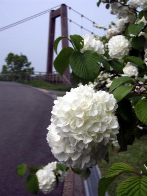 20120508備北丘陵公園19