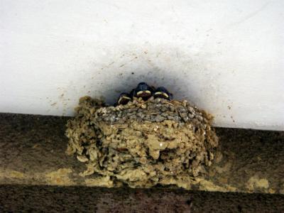 20120705子燕