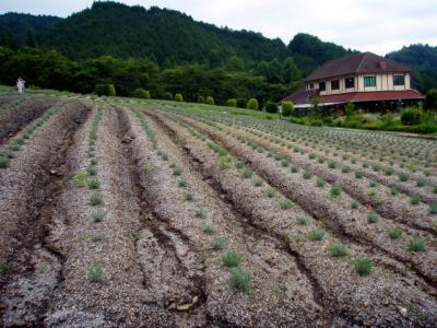 20120711米子・蒜山02