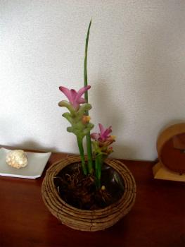 2012_06030038.jpg