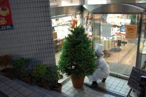 2012クリスマス モミの木
