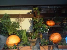 洋菓子店前のかぼちゃ