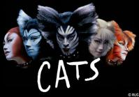 cats001