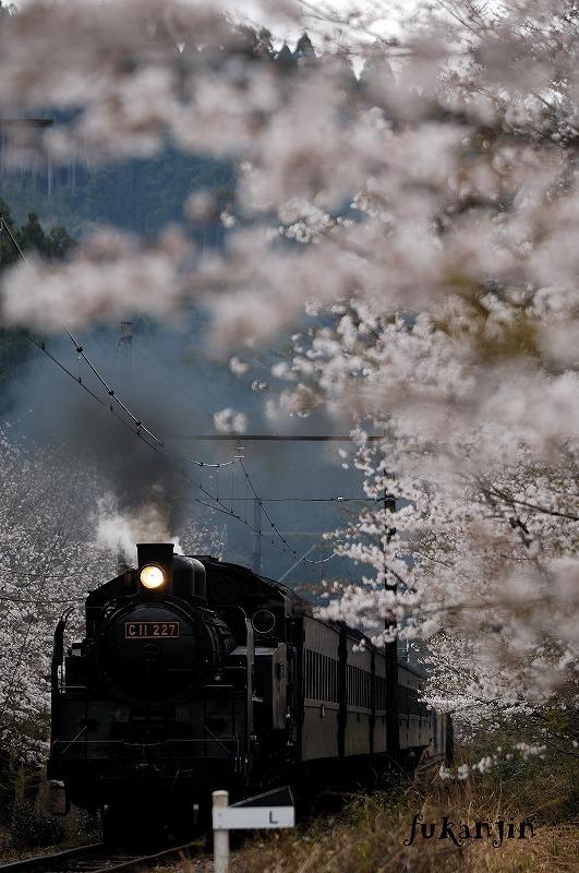 大井川鉄道さくら駿河徳山7