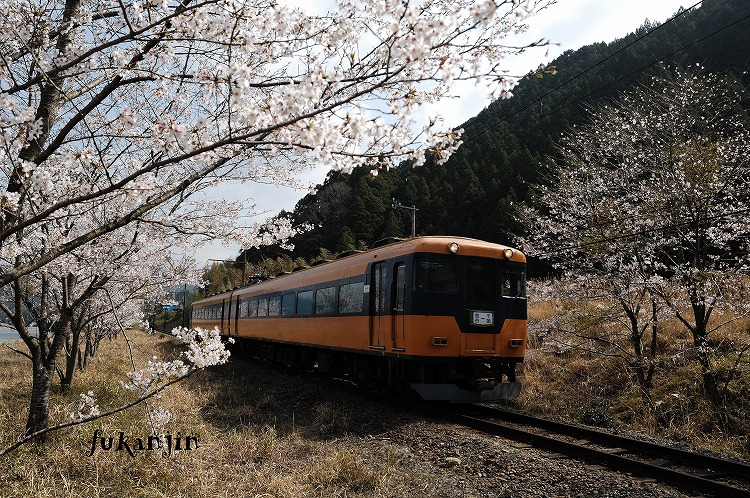 大井川鉄道さくら駿河徳山6
