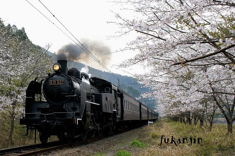 大井川鉄道さくら駿河徳山5
