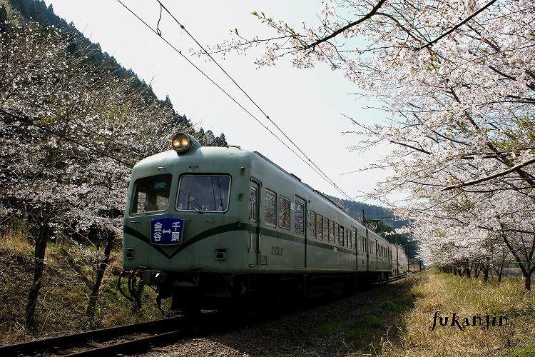 大井川鉄道さくら駿河徳山4
