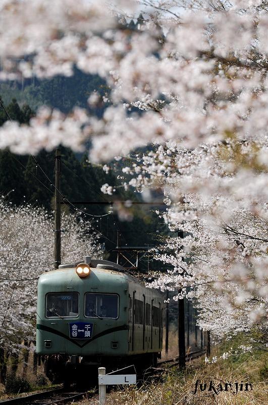 大井川鉄道さくら駿河徳山3
