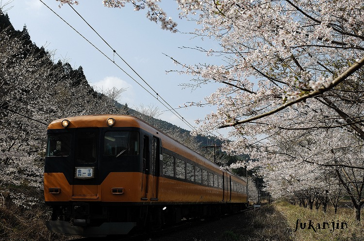 大井川鉄道さくら駿河徳山2