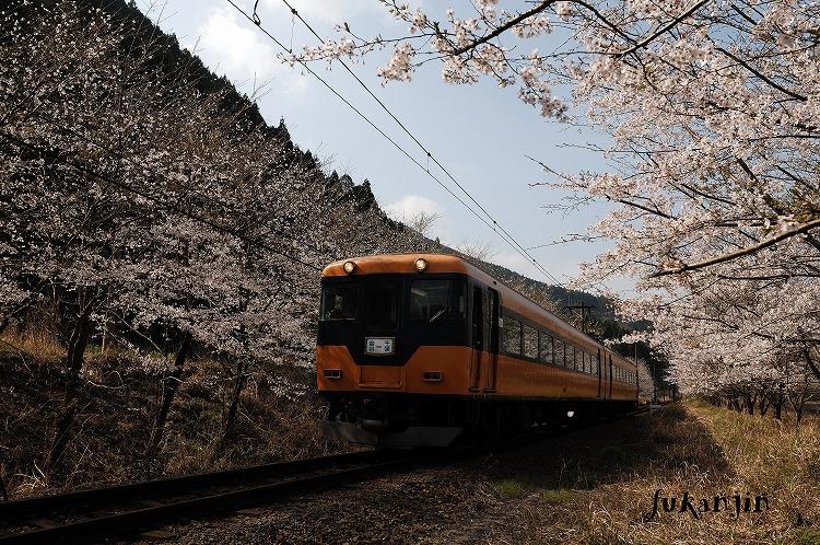 大井川鉄道さくら駿河徳山1