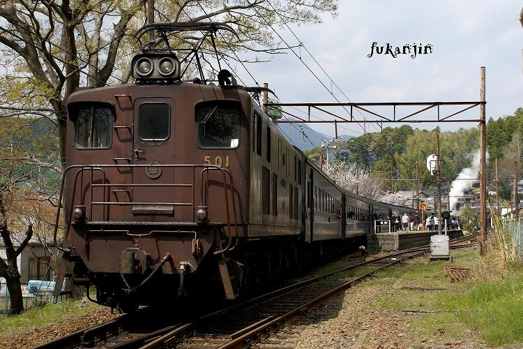 大井川鉄道桜 (5)