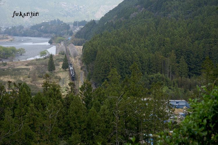 大井川鉄道桜 駿河徳山俯瞰 (4)