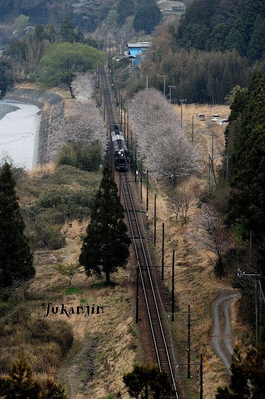 大井川鉄道桜 駿河徳山俯瞰 (2)