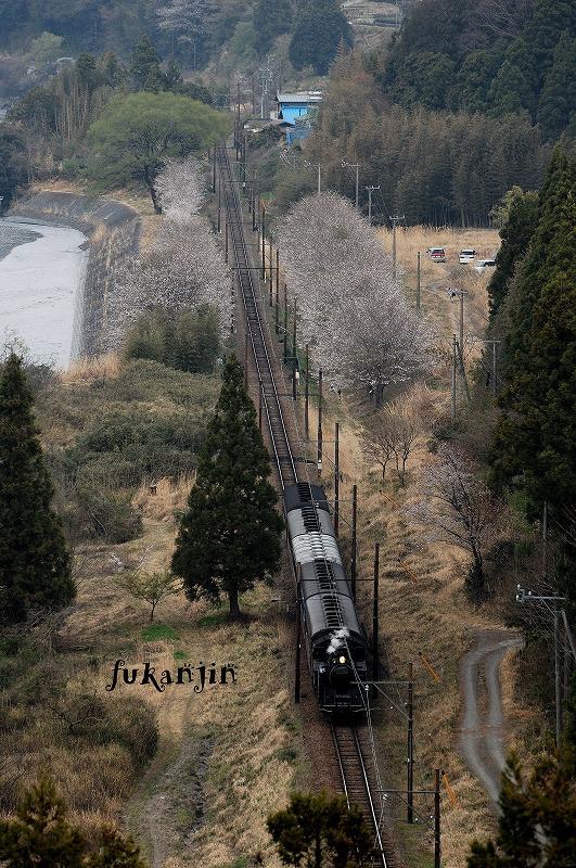 大井川鉄道桜 駿河徳山俯瞰 (3)