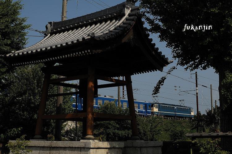虎姫円融寺 5