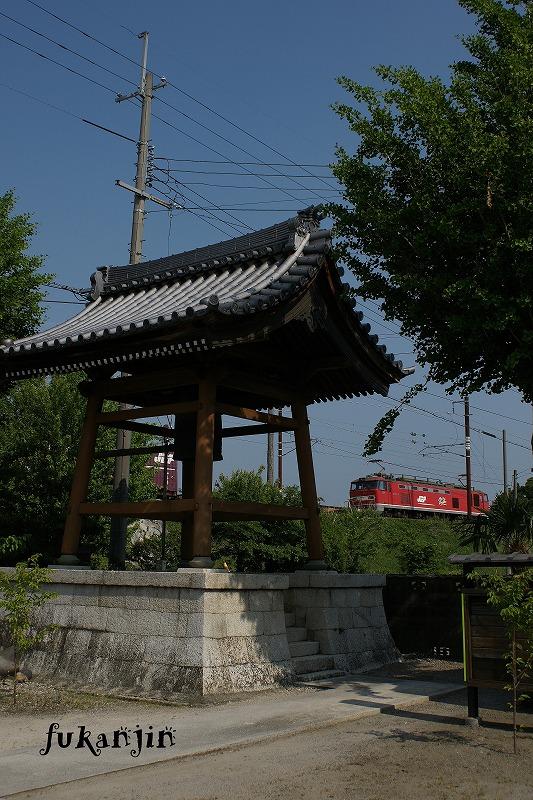 虎姫円融寺 3