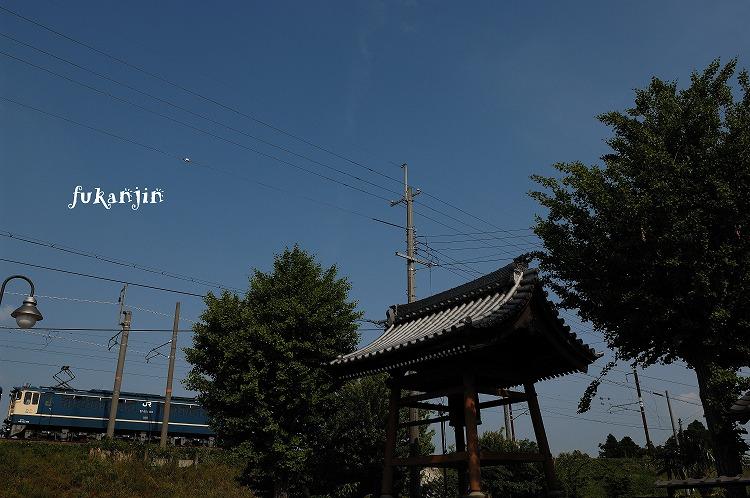 虎姫円融寺 4