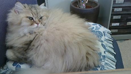 不動産屋の猫2