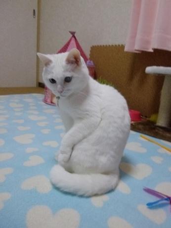 片足挙げふきちゃん1