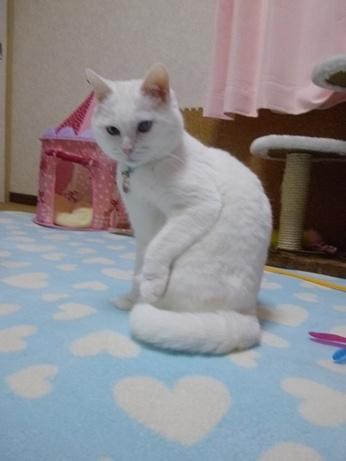 片足挙げふきちゃん2