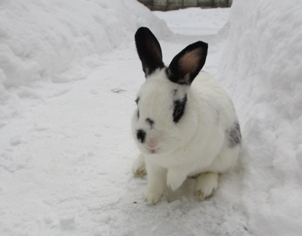 2012年12月雪初体験2