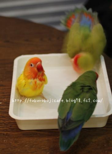 水浴び3羽