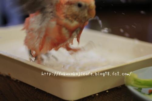 ルカ初水浴び2