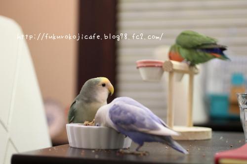3羽おやちゅ1