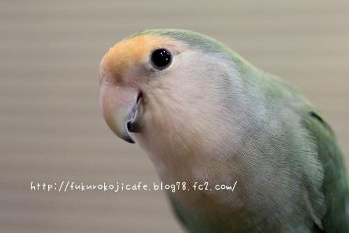 ココちゃん1