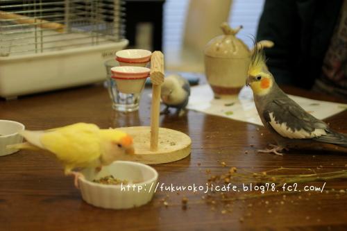 お食事会2