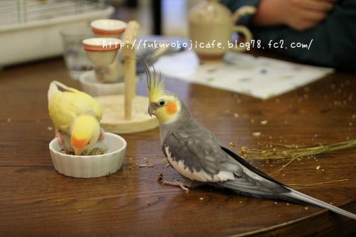 お食事会4